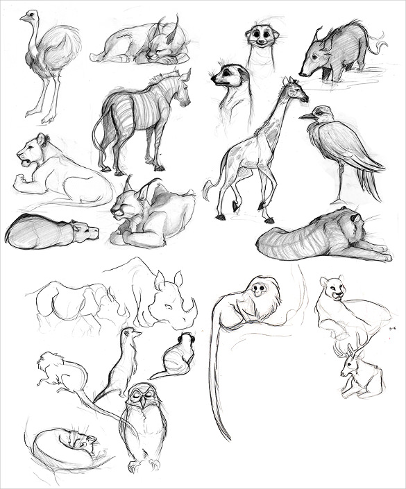 585x705 Animal Drawings Free Psd, Ai, Vector Eps Format Download