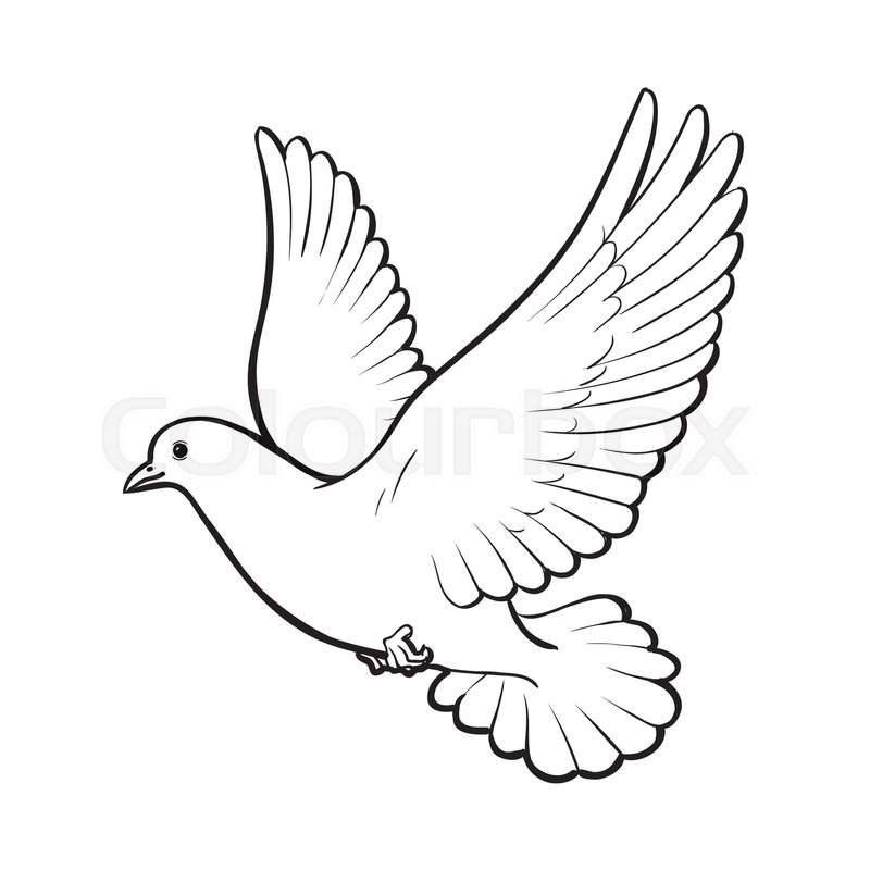 800x800 Free Flying White Dove, Sketch Style Vector Illustration Isolated