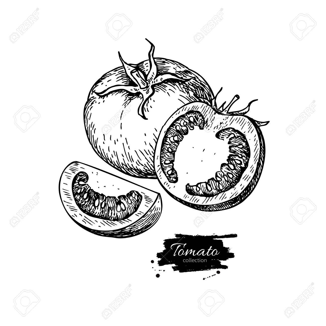 1300x1300 Tomato Vector Drawing. Isolated Tomato And Sliced Piece. Vegetable