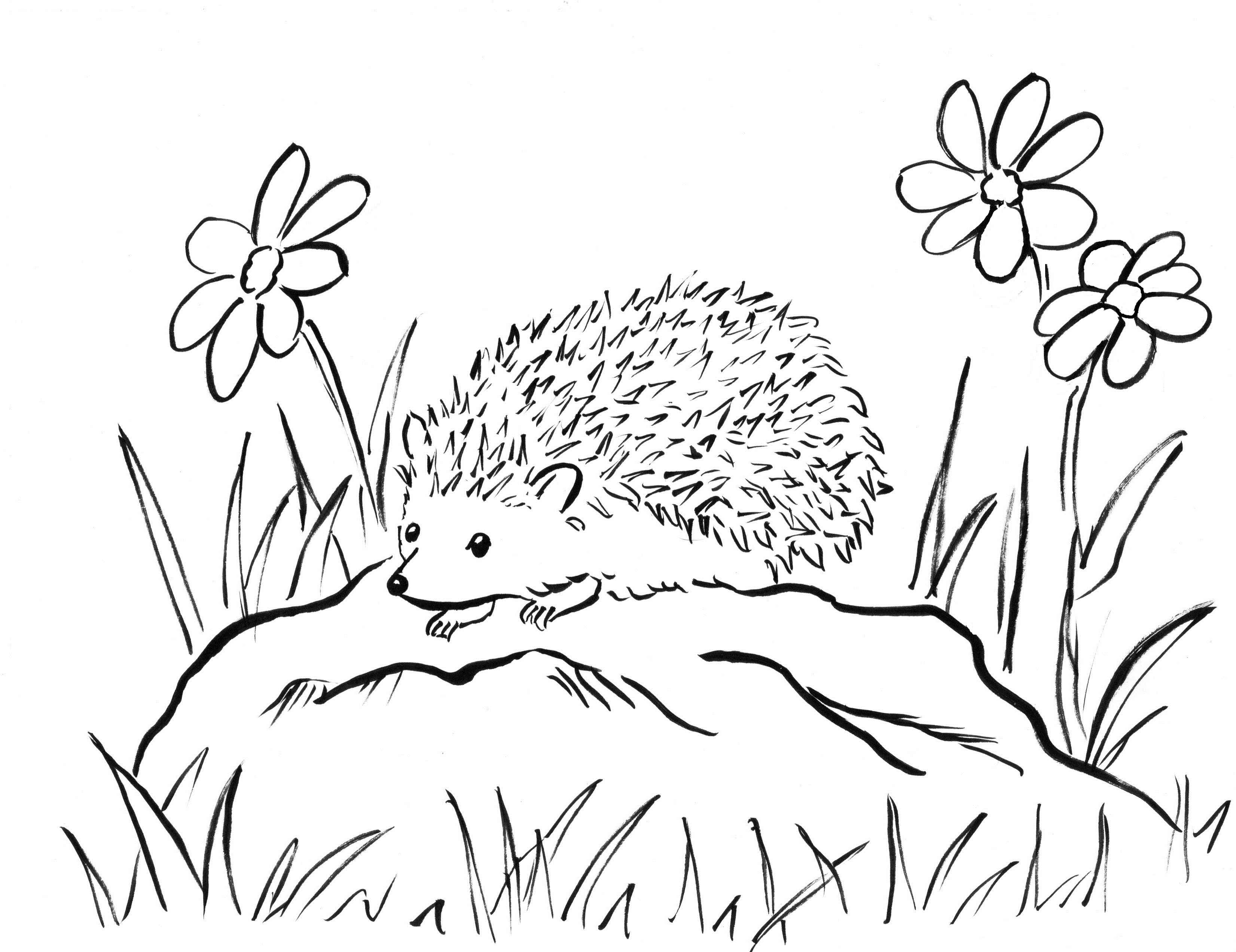 3303x2545 Scarce Hedgehog Coloring Page Pages Colouring In Humorous Draw