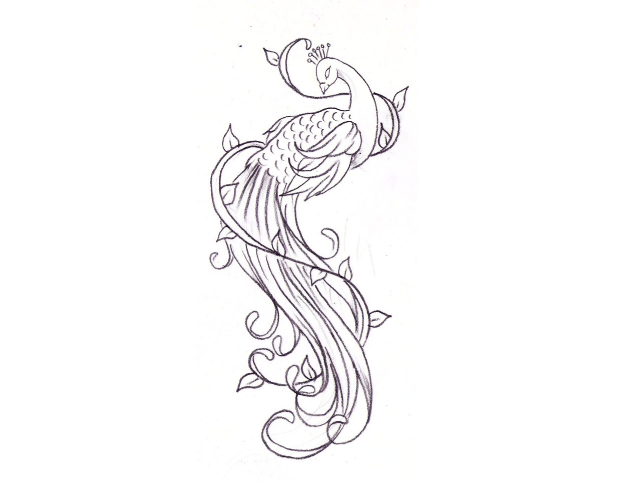1280x960 Line Art Bird Tattoos Free Designs