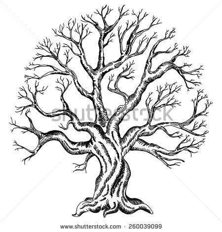 450x470 Family Tree Drawings Family Tree Drawing Stock Images Royalty Free