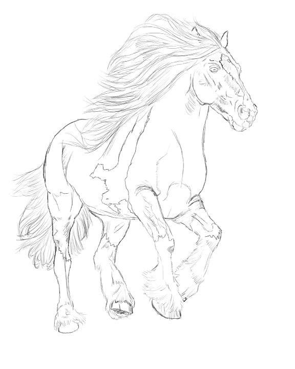 Free Horse Drawing