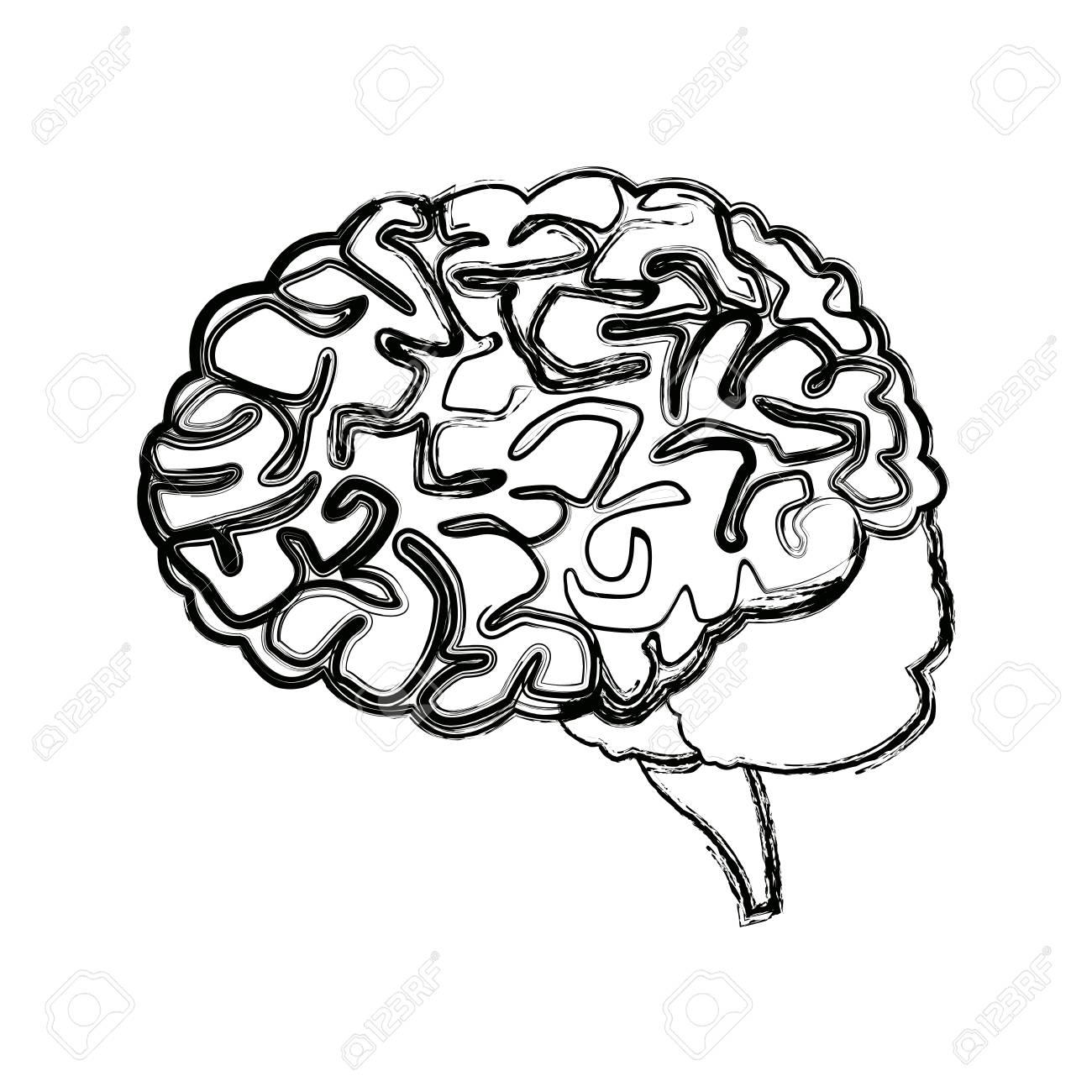 1300x1300 Human Brain For Medical Healthy Memory Anatomy Design Vector