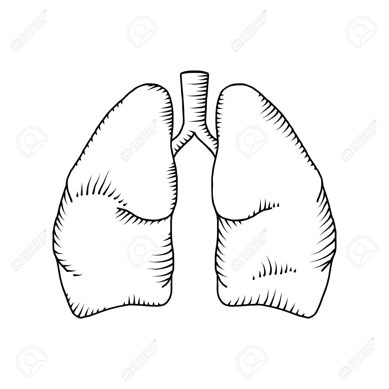 1300x1300 Lung Vector Detailed Illustration. Medical Background Royalty Free