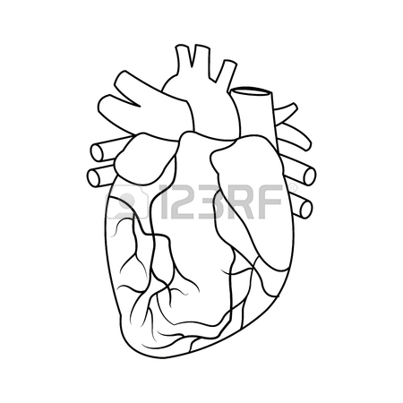 450x450 Anatomy Of The Human Heart Medical Vector Illustration Royalty