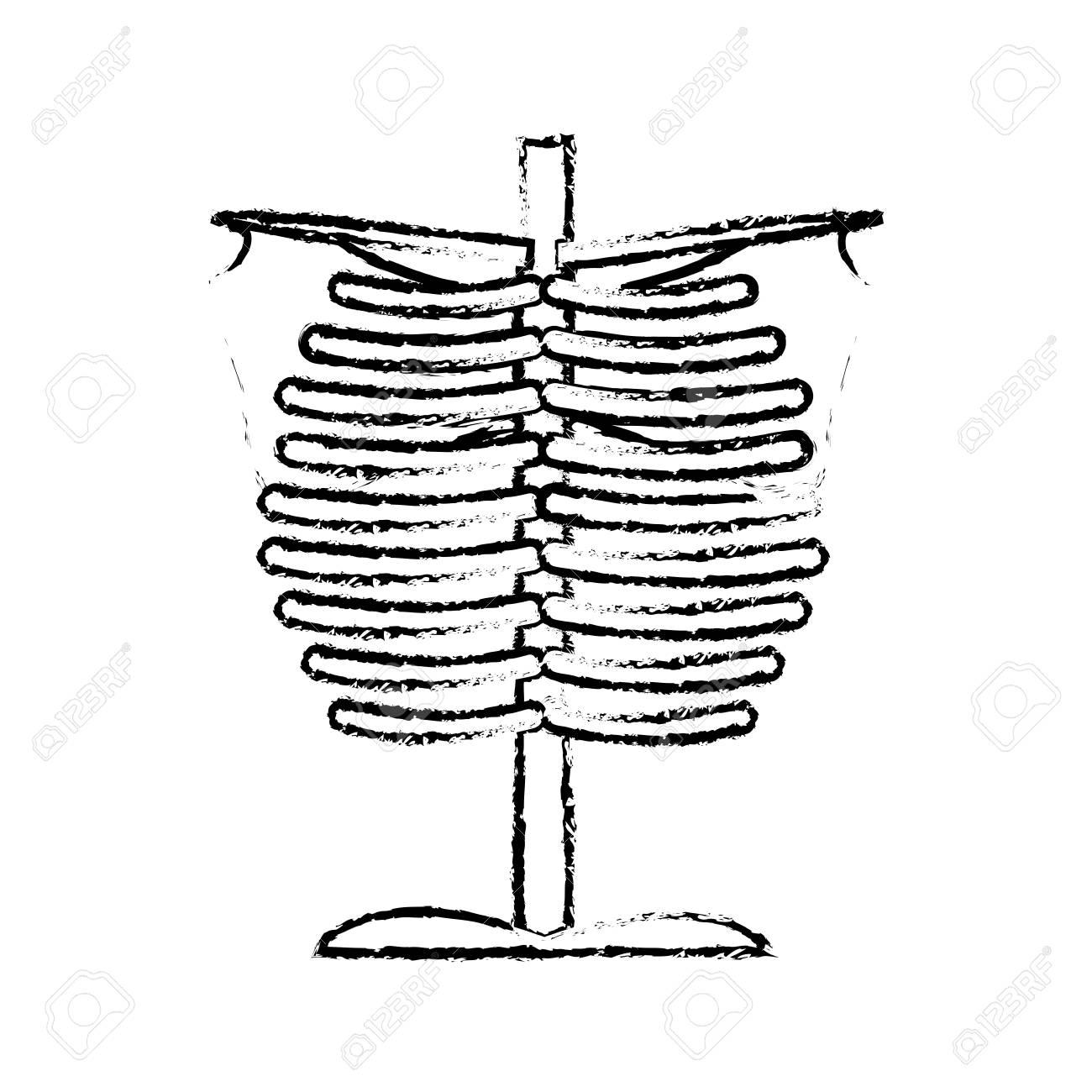 1300x1300 Sketch Human Chest Bones Anatomical Medical Vector Illustration