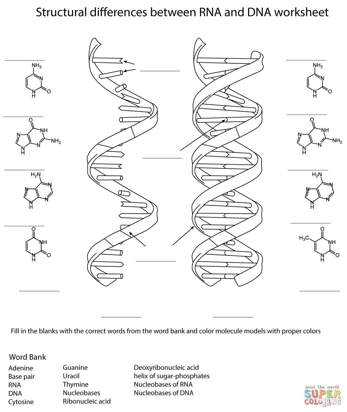 1364x1620 Rna And Dna Worksheet Coloring Page Free Printable Coloring Pages