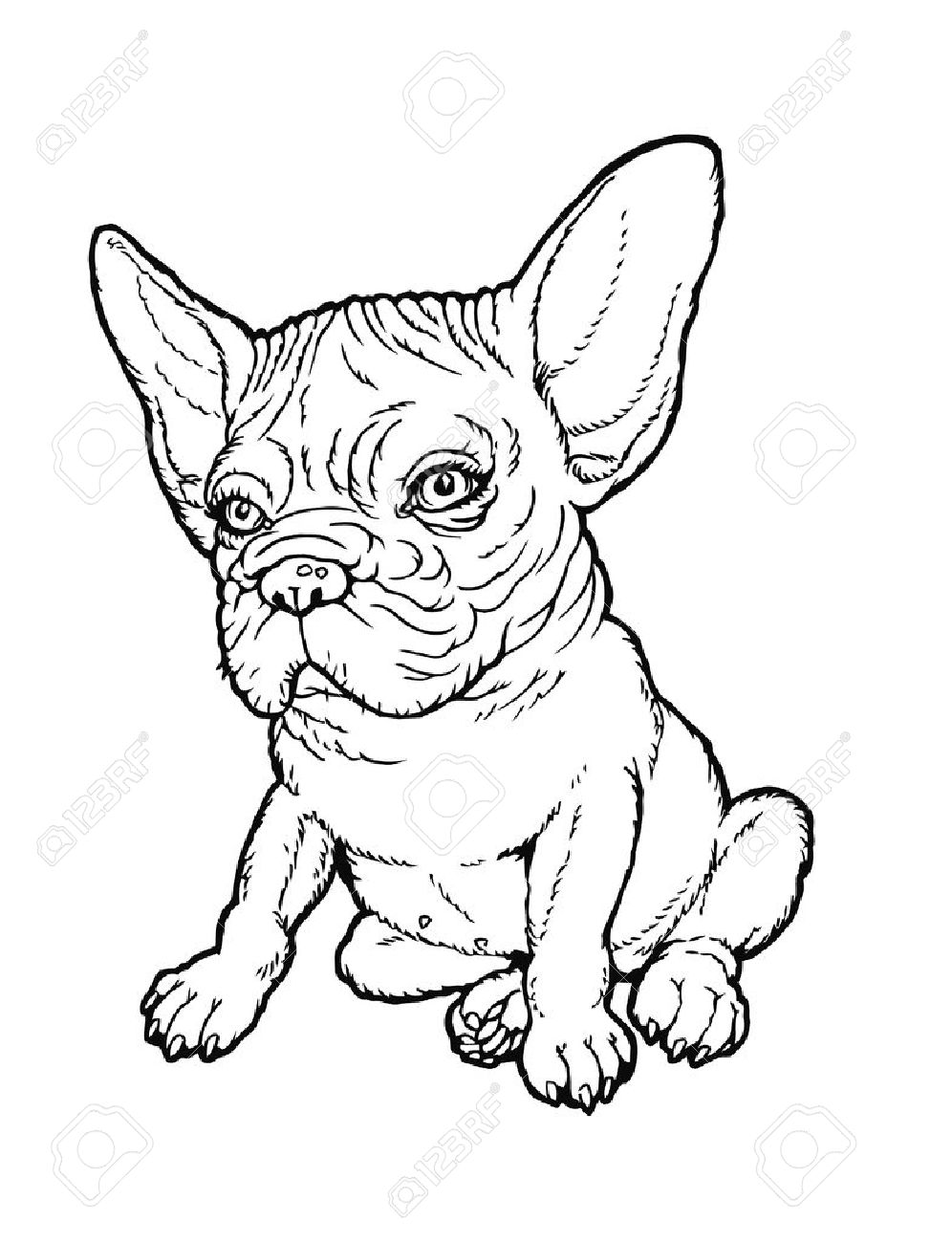 996x1300 Black And White Line Drawing Plump French Bulldog Puppy.