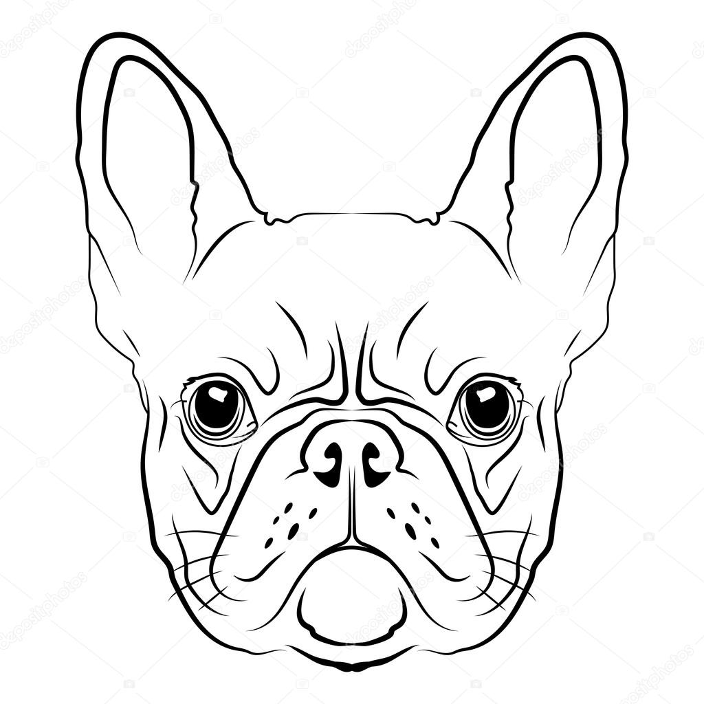 1024x1024 French Bulldog Head Stock Vector Victoria Novak