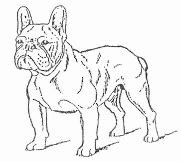 363x325 French Bulldogs Frustyle, Moscow, Russia. Standart Of French