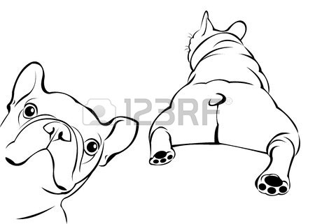450x321 Cat Animal Contour Drawing Creative Dog Vector Breed Cute Pet