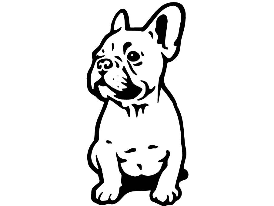 904x680 French Bulldog 3 Dog Breed K 9 Animal Pet Puppy Paws Canine