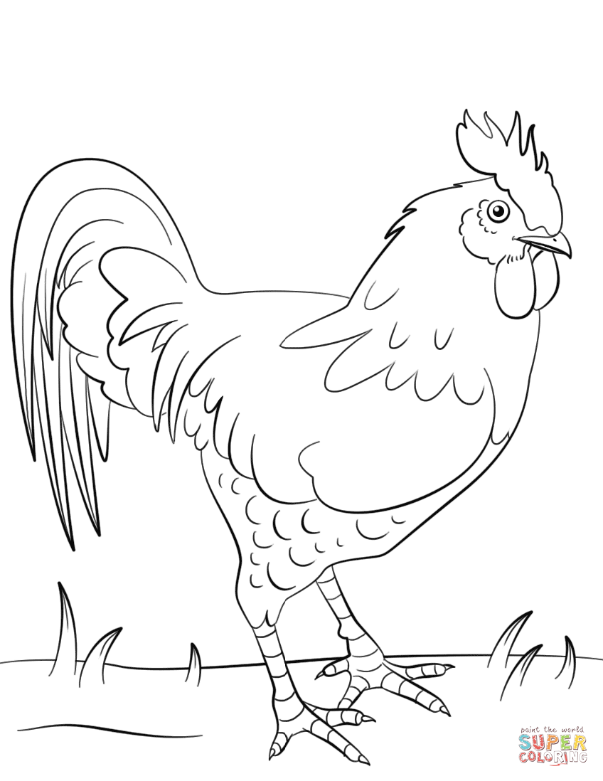 French Hen Drawing