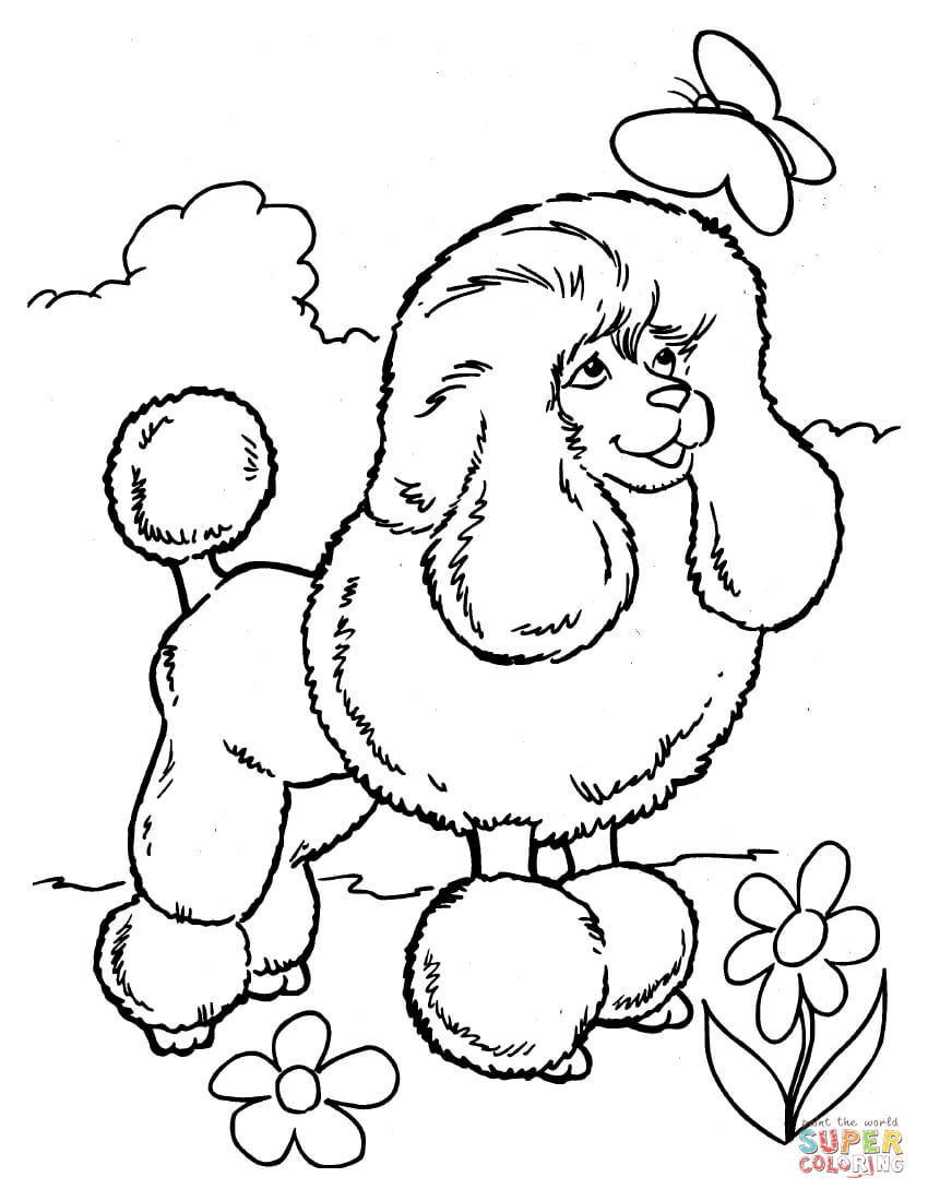 French Poodle Drawing at GetDrawings.com | Free for personal use ...