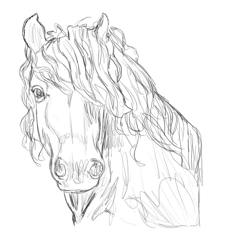 Friesian horse printing pictures coloring pages ~ Friesian Horse Drawing at GetDrawings.com | Free for ...