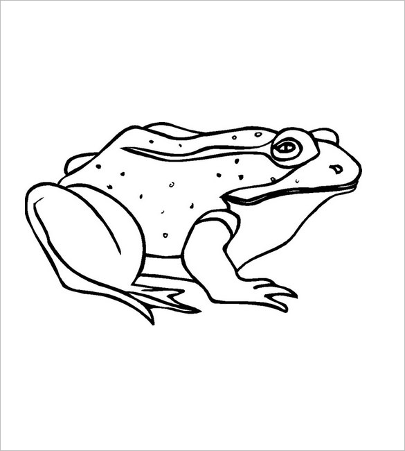 585x650 Frog Template