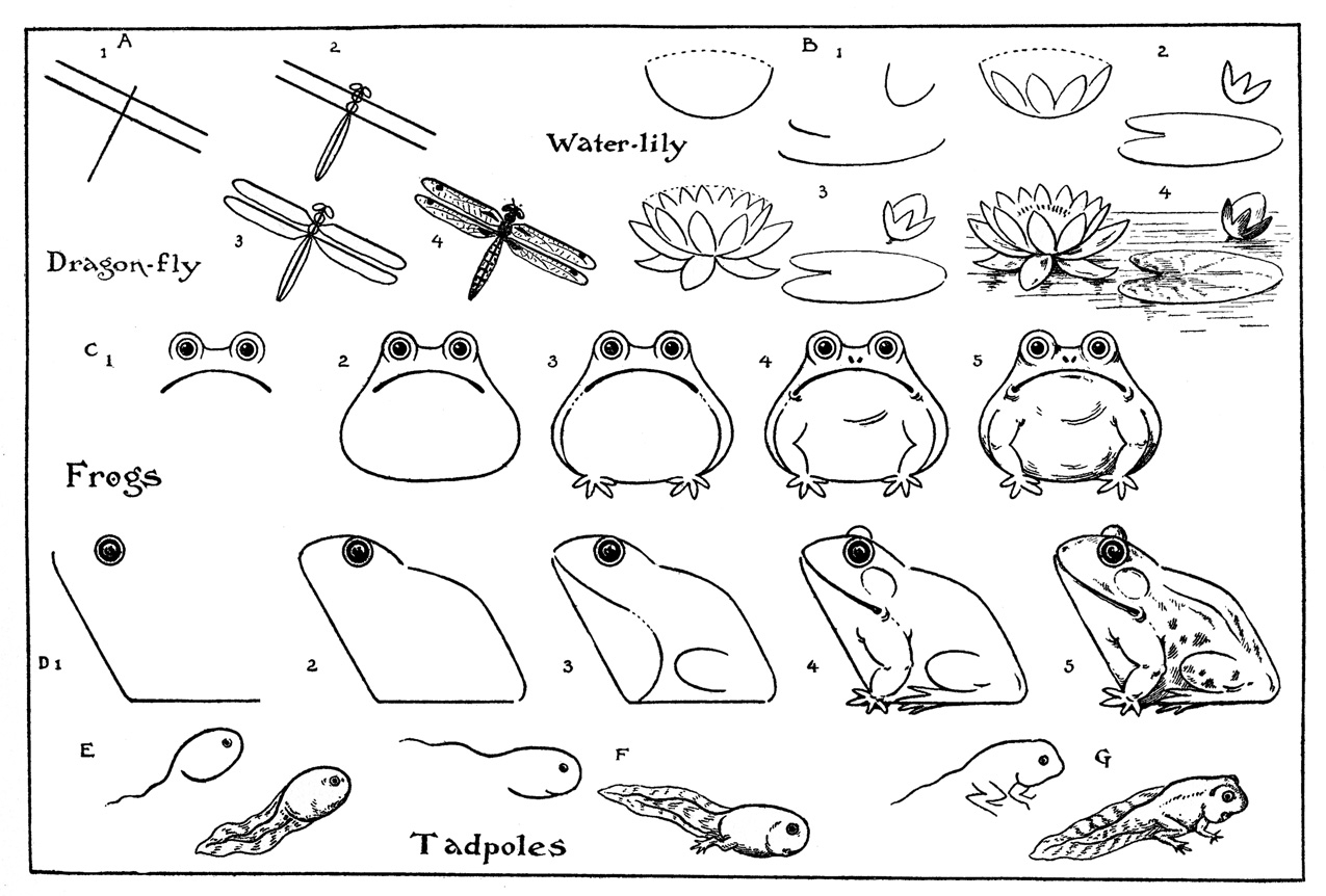 1275x862 How To Draw A Frog For Kids Step By Step