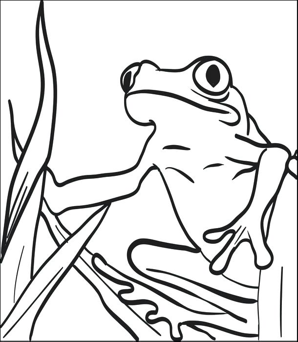 610x700 Printable Frog Coloring Pages Printable Frog Coloring Page