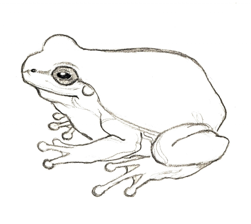 1024x914 Drawings Of Frogs Rampant Eclecticism 365 Drawings Frog 6365