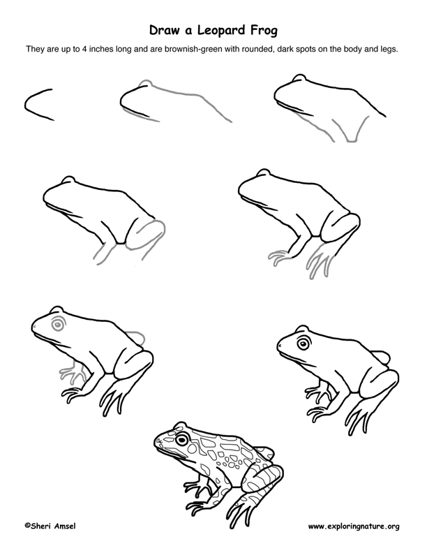 612x792 Frog (Leopard) Drawing Lesson