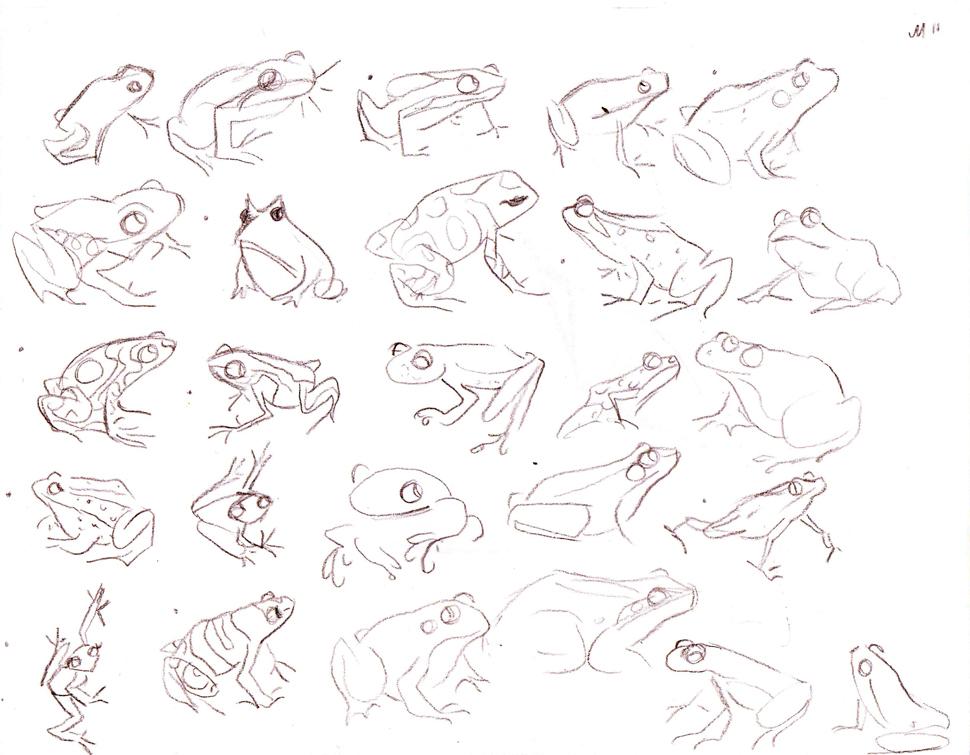 970x755 Frog Sketch Mindi Leatham