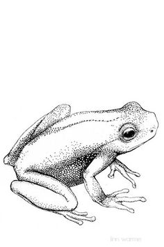 236x354 How To Draw A Frog Frog Drawing, Frogs And Frog Art
