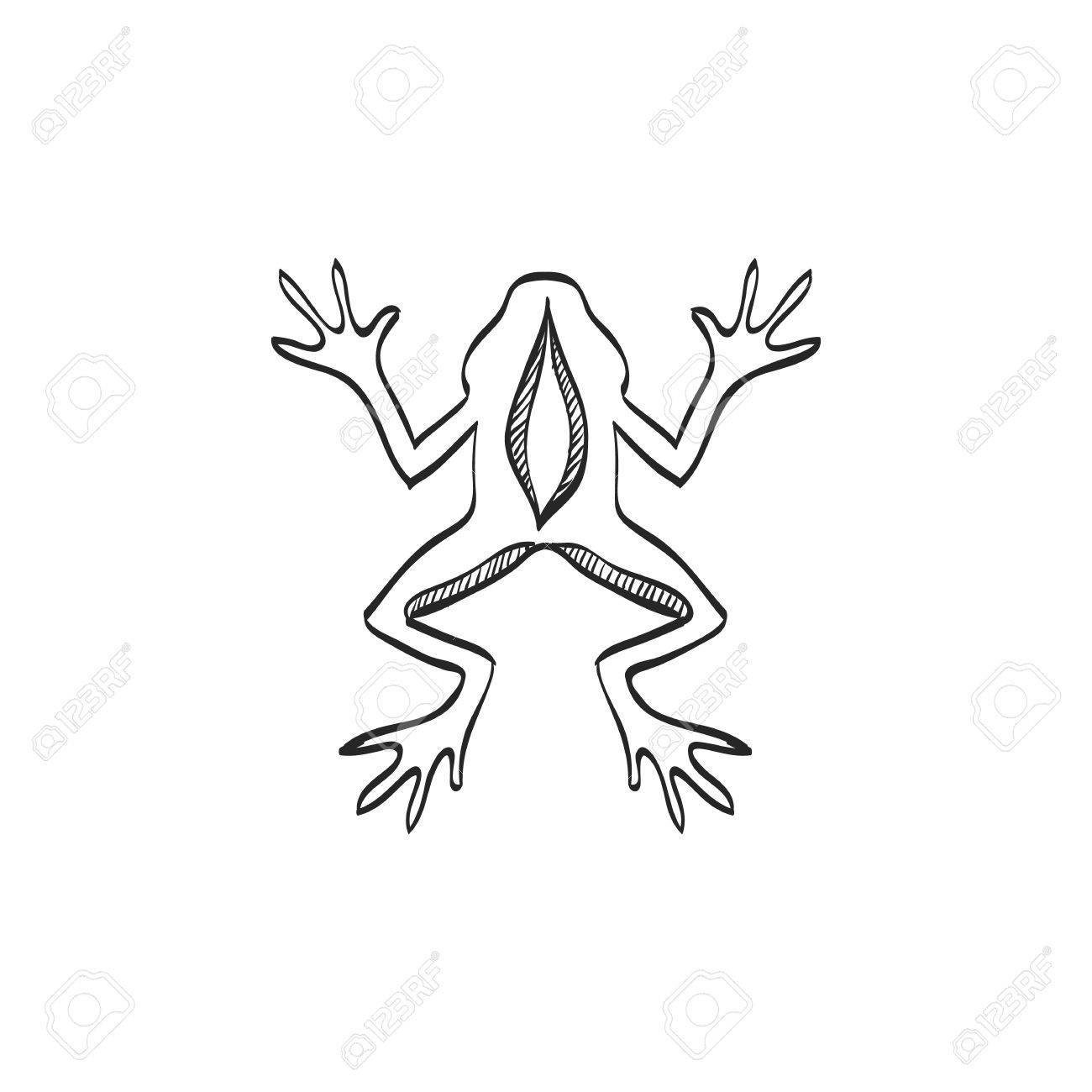 1300x1300 Lab Frog Icon In Doodle Sketch Lines. School Experiment Biology