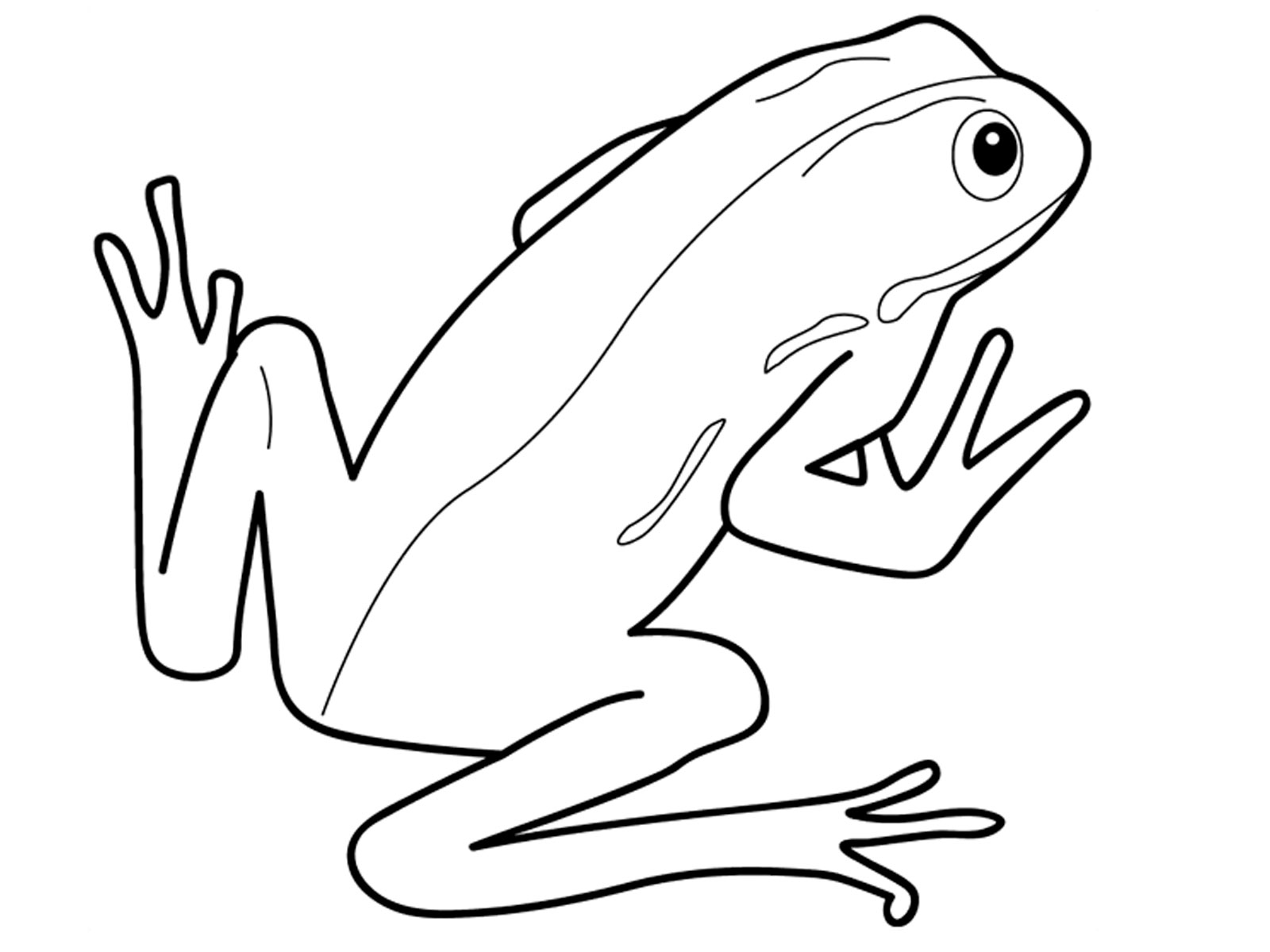 1600x1200 Amphibian Clipart Drawing
