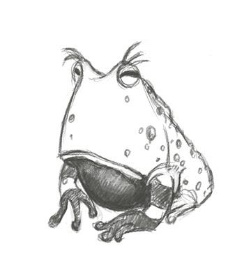 360x390 Shawna Jc Tenney Random Frog Sketch