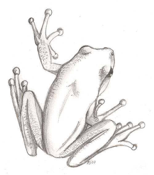 500x568 Tree Frog By Leoness