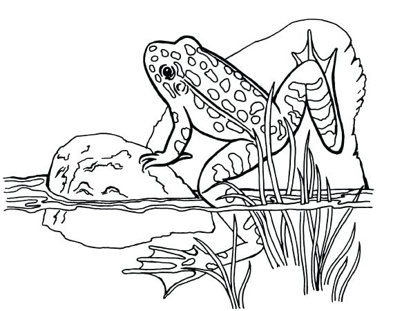 569x450 Tree Frog Coloring Pages Frog Coloring Page Green Tree Frog