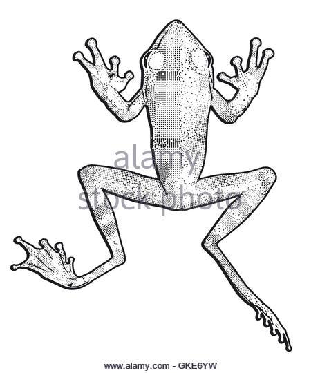 463x540 Frog Jump Illustration Stock Photos Amp Frog Jump Illustration Stock