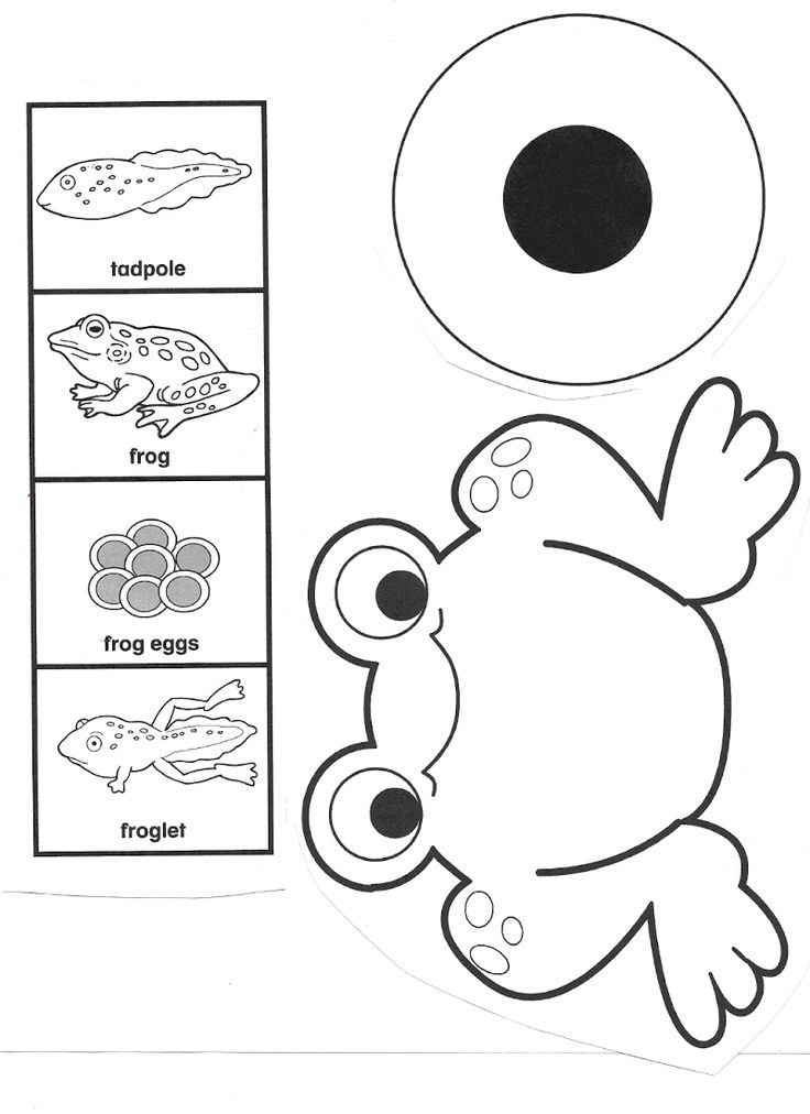 736x1012 96 Best 2rs 4.3 Frogs Images On Frogs, Activities