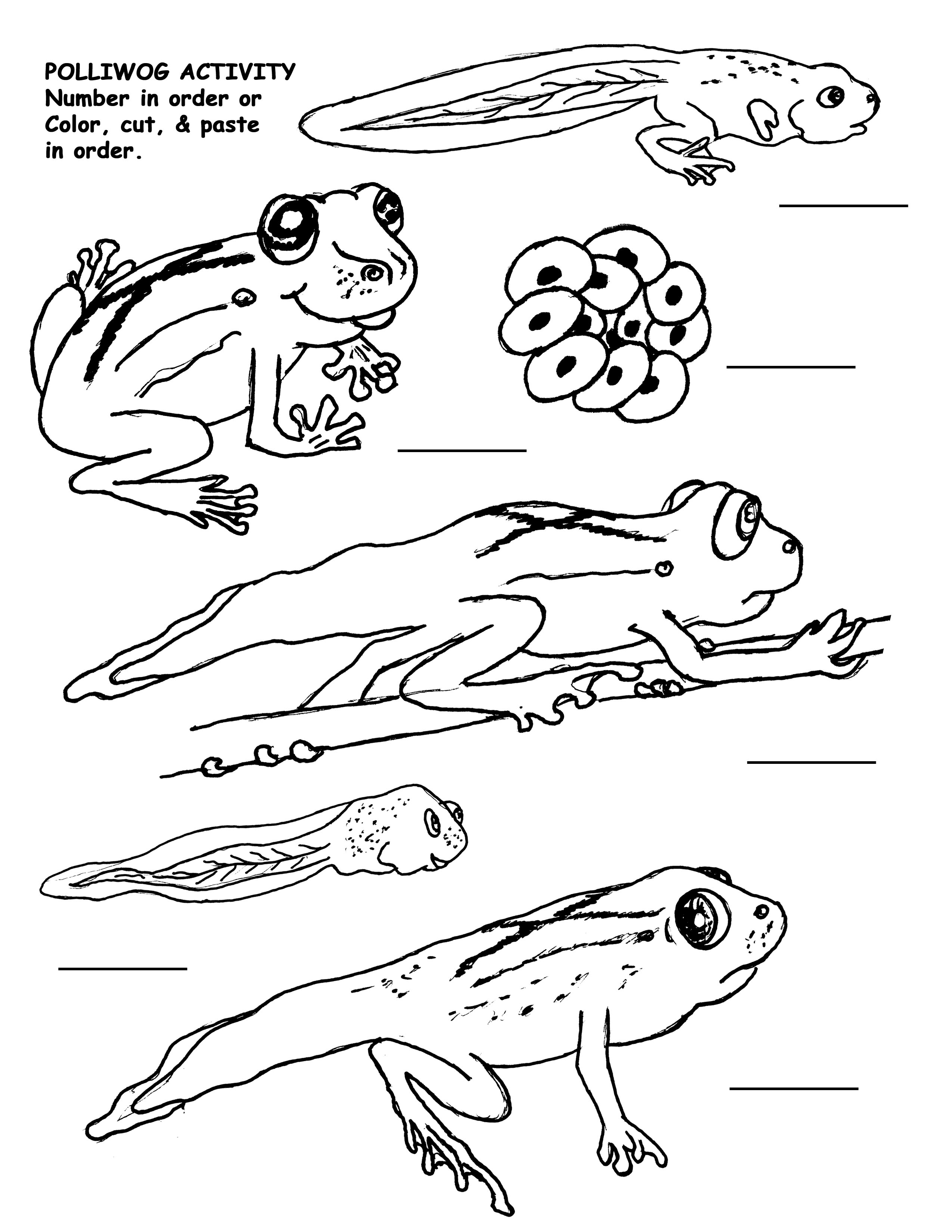 2550x3300 Life Cycle Of A Frog Drawing