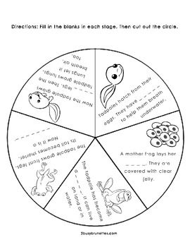 270x350 Life Cycle Of A Frog Wheel Free After School Frogs