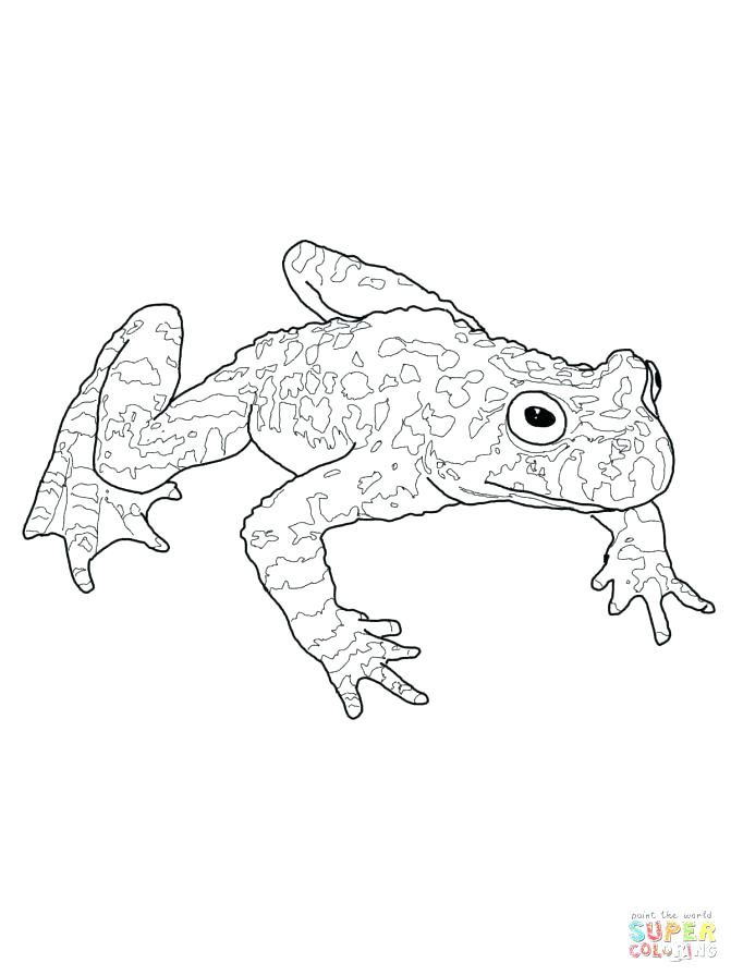 671x895 Tadpole Coloring Page Tadpole Coloring Page Medium Size