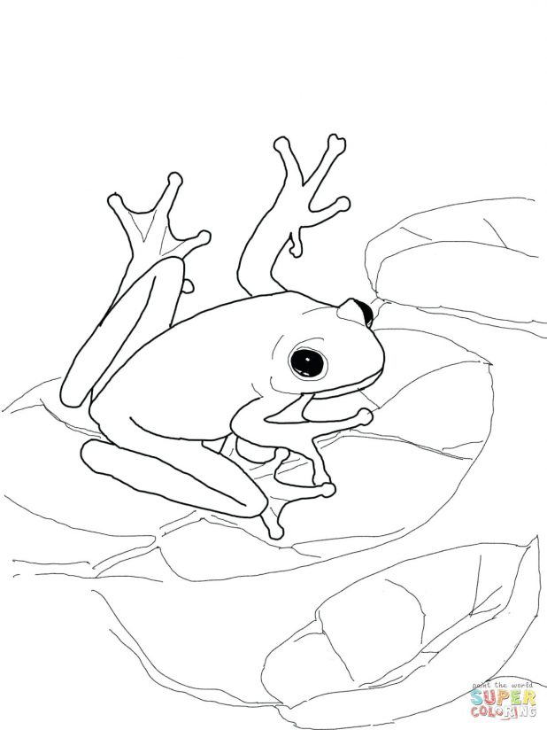 618x824 Coloring Remarkable Frog Life Cycle Coloring Page. Frog Life