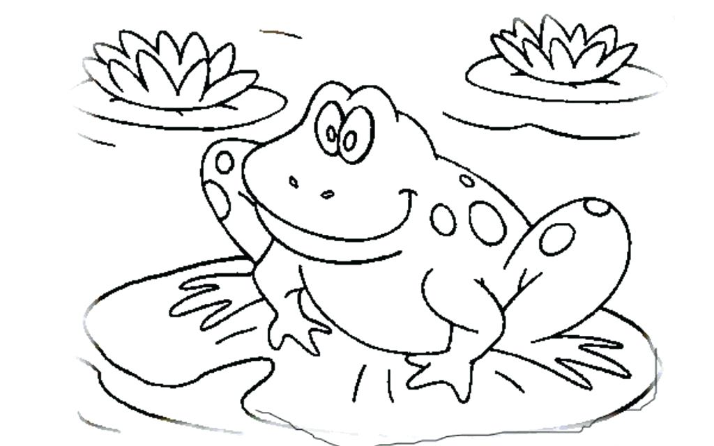 1024x640 Elegant Frog Coloring Pages Printable Kids Life Cycle Of Page Free