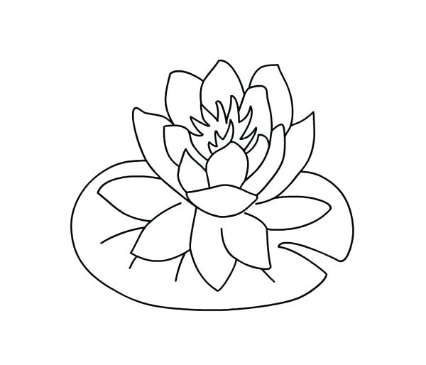 600x514 Fresh Lily Pad Coloring Page Or Lily Pad Template 54 Frog On Lily