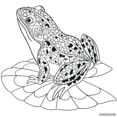 500x500 Frog Coloring Pages F Is For Frog Coloring Page Cartoon Frog