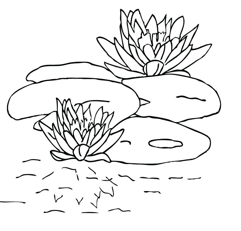 793x759 Lily Coloring Pages Lily Pad Coloring Pages Frog And Lily Pad