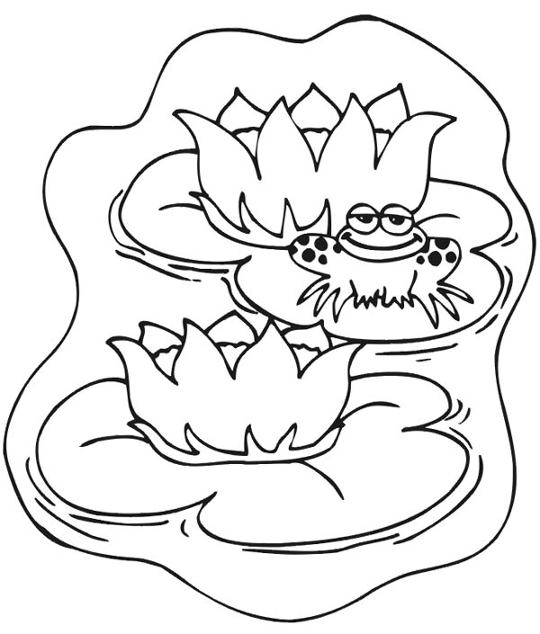 600x705 Lily Pad, Frog Smile While Sitting On Lily Pad Coloring Page