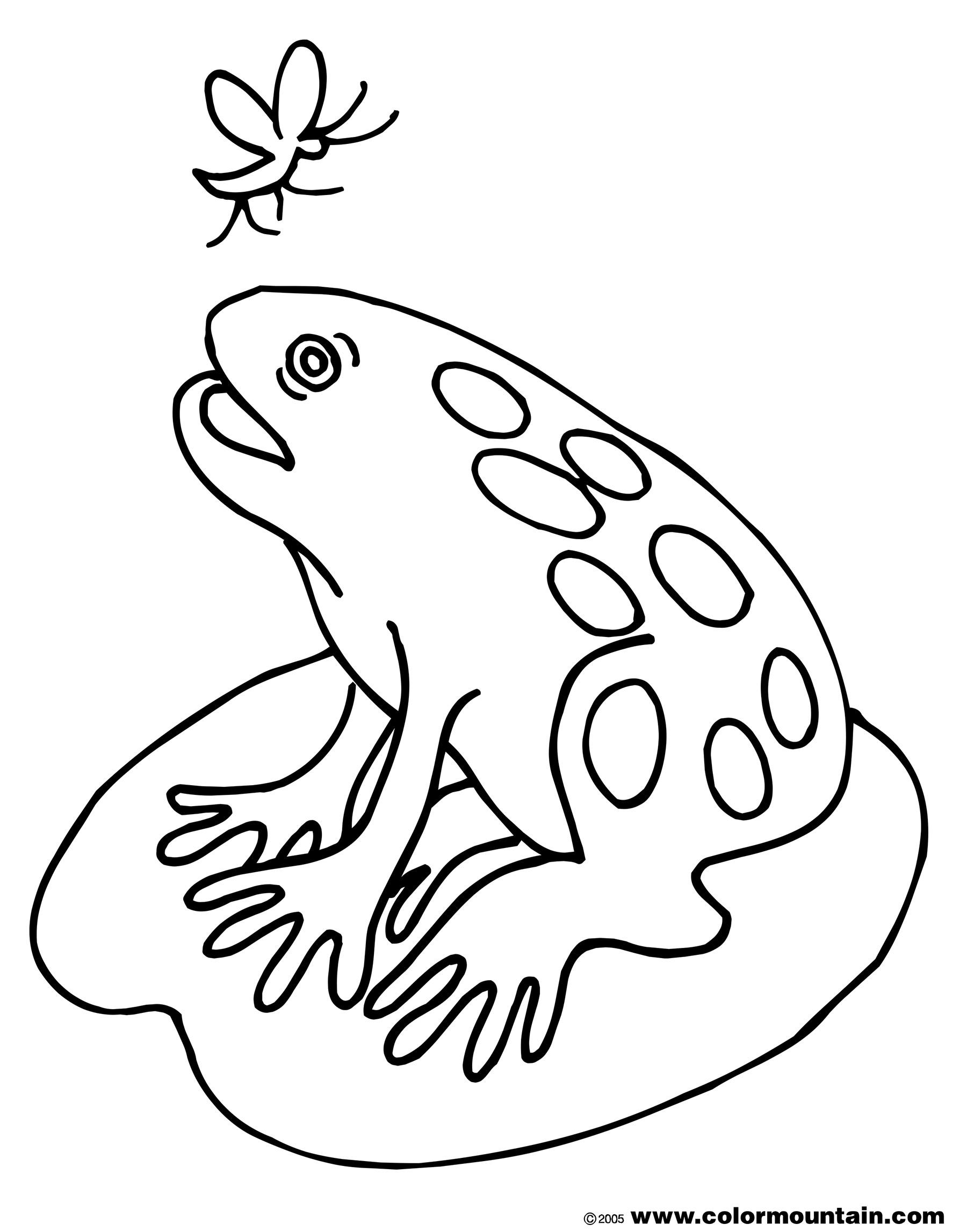 1800x2294 Fat Frog Coloring Sheet