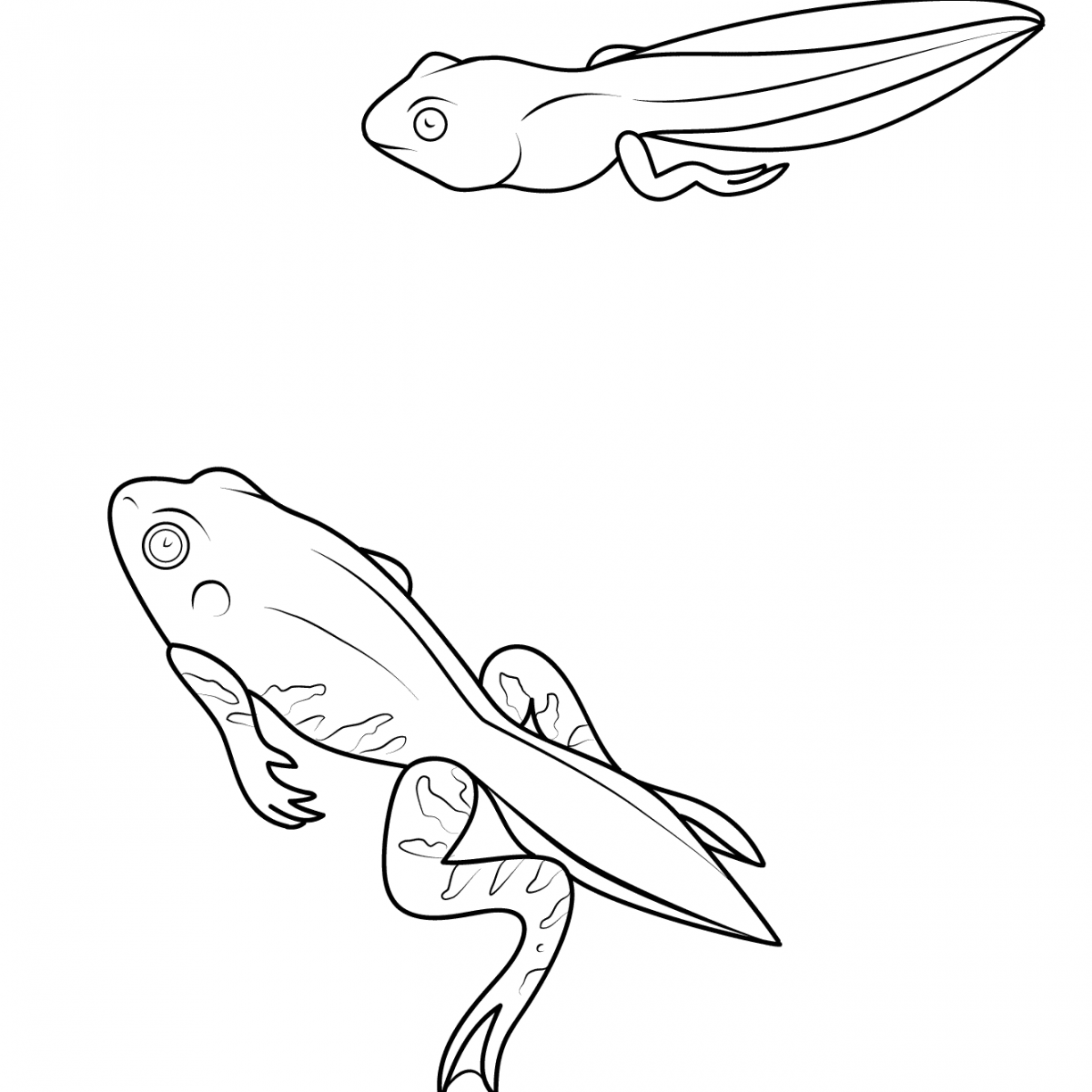 1224x1224 Coloring Pages Amphibian Toad Page Tadpole Free Printable Animals