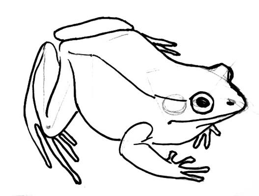 Coloring Pages Pond Animals : Frogs drawing at getdrawings.com free for personal use frogs