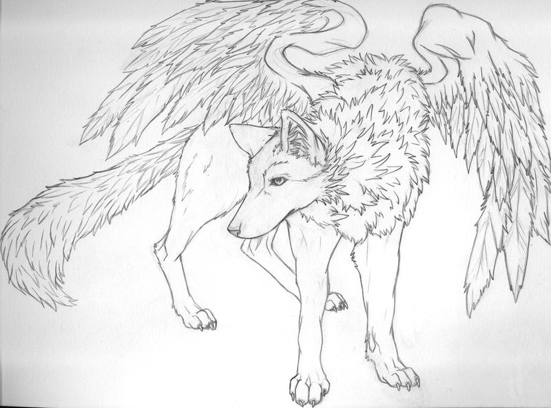 800x593 Winged Wolf Outline By Reenie4790 On Winged Wolves