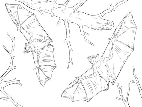 Fruit Bat Drawing At Getdrawings Com Free For Personal Use Fruit