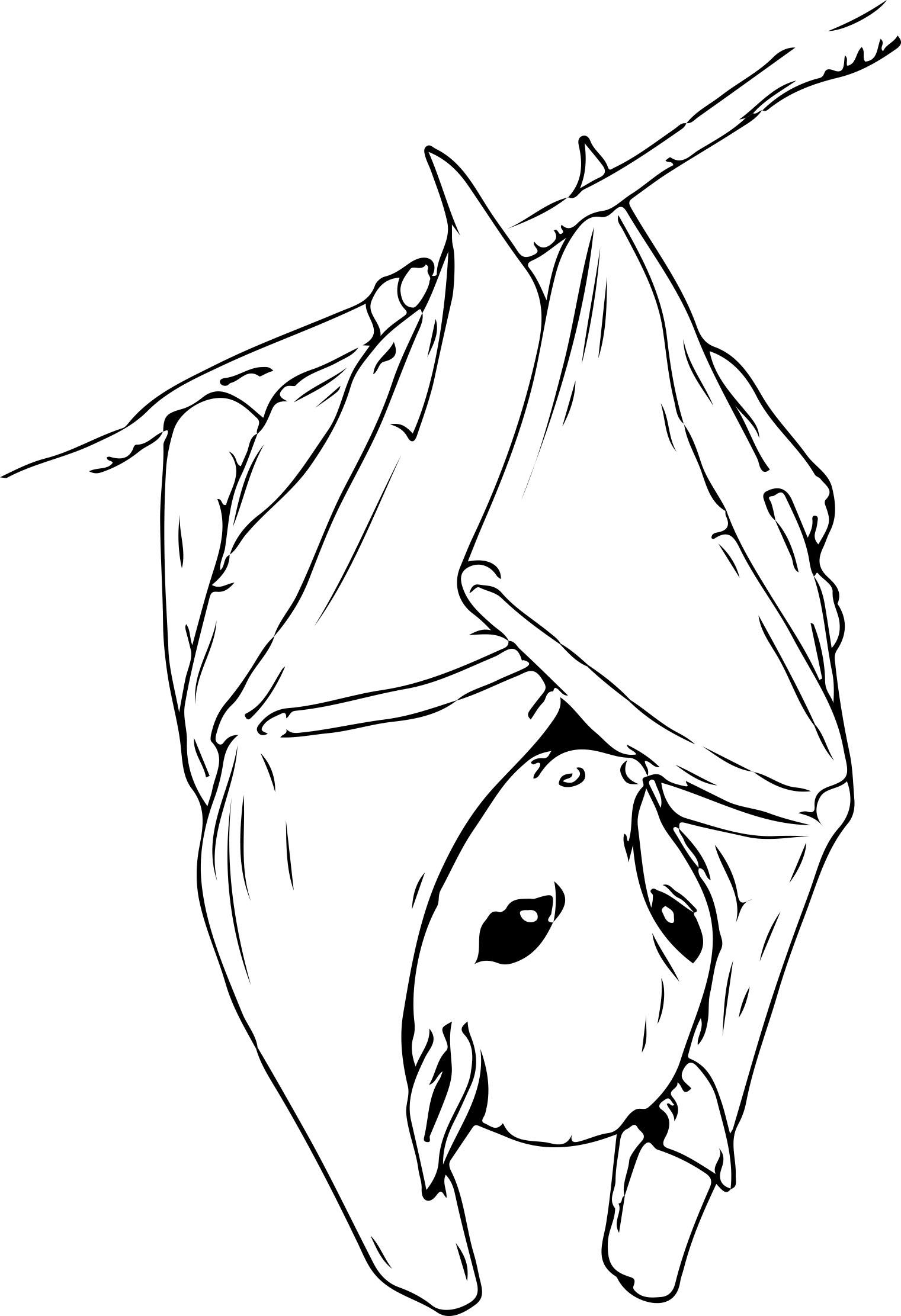 Fein Frei Druckbare Fledermaus Malvorlagen Zeitgenössisch ...