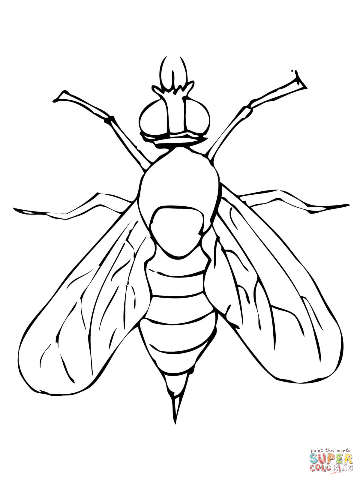 1200x1600 Drosophila Fruit Fly Coloring Page Free Printable Coloring Pages